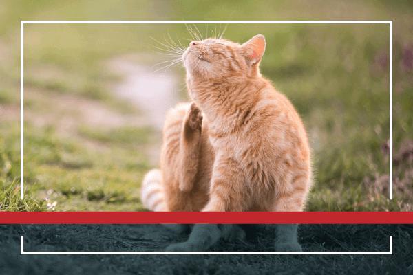 Do You Have Your Pet on Flea/Tick Preventatives?