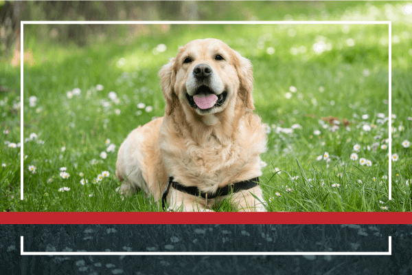 Spring is Breaking Out…All Over Your Pet