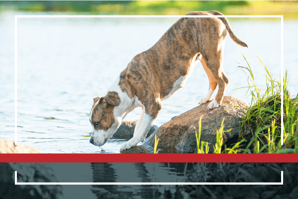Prevention is Your Pet's Best Defense!